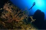 Championnat de France de photo sous-marine : le palmarès 2019