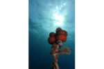 Concours de photos sous-marines de Monaco : le palmarès adulte et enfant