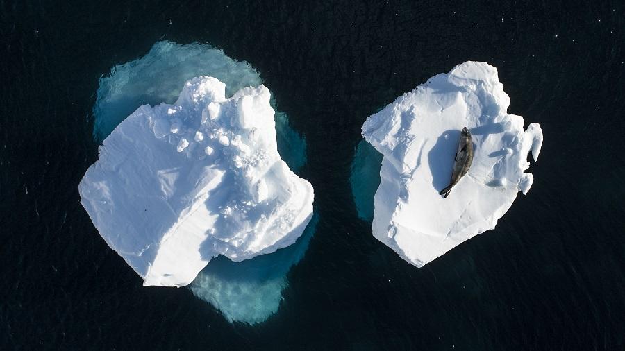 Bain de soleil en Antarctique. © Greg Lecoeur