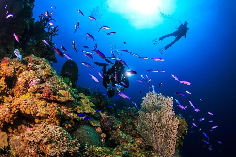 Plongée aux Bahamas