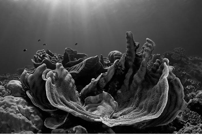 2ème prix Noir et Blanc © Christophe Kazmierski