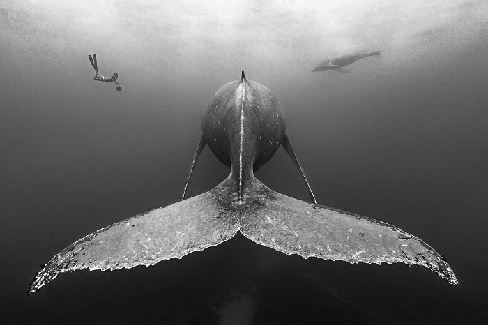 1er prix Noir et Blanc © François Baelen