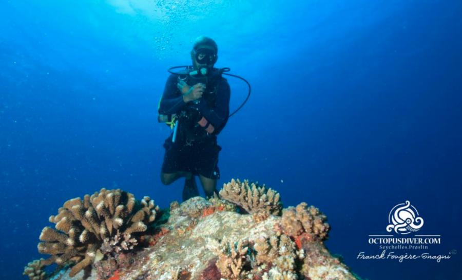 Restauration de corail aux Seychelles