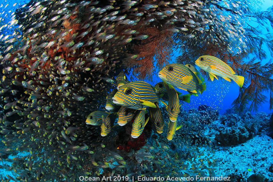 Récifs : Raja Ampat