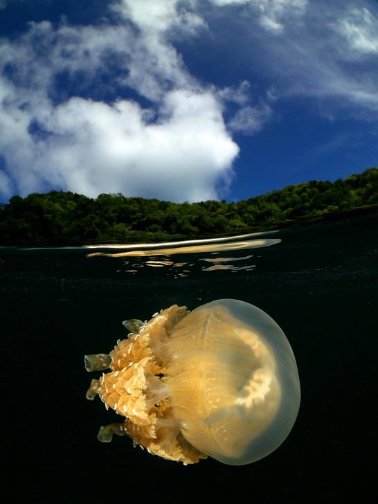 """""""Jellyfish from Palau"""", Palau. © Enrico Somogyi / UPY2020"""