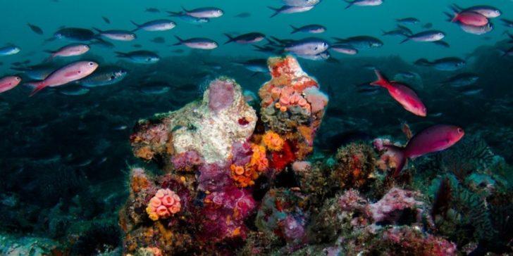 Plongée à São Tomé