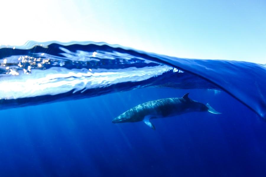 """Minke wave"", Ningaloo reef (Australie). © Ines Goovaerts / UPY2020"