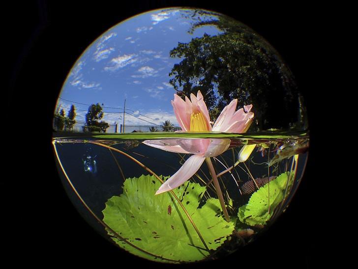 """Uluna Lily"", Indonésie. © ManBD / UPY2020"