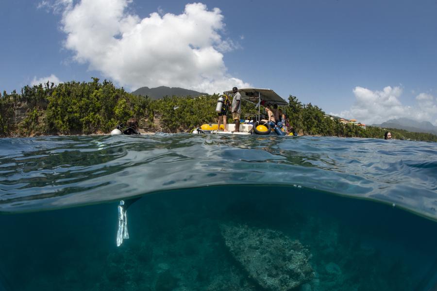 Mi-air mi-eau dans le parc national de Cabrits. Île de la Dominique