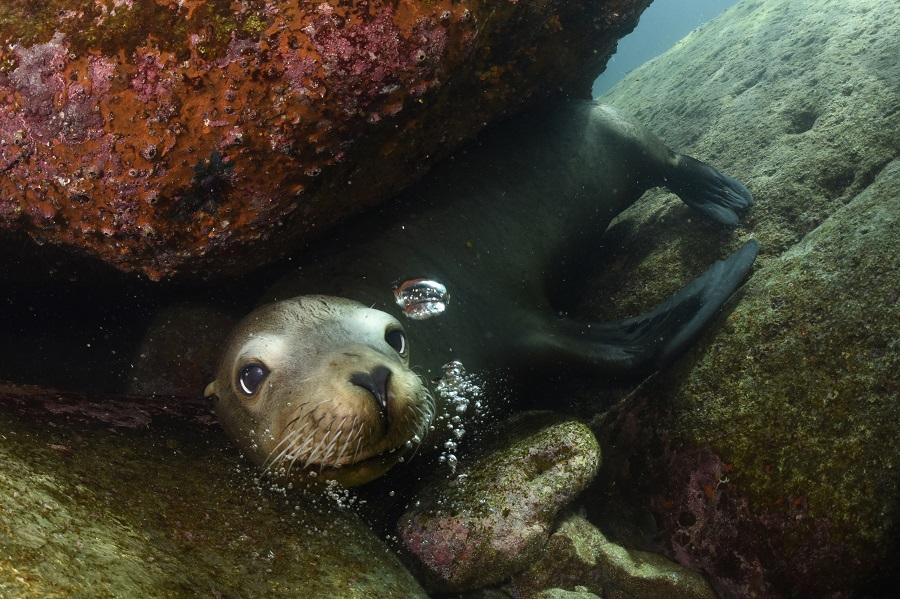 Jeu de cache-cache avec les plongeurs entre les rochers. © Nicolas Barraqué
