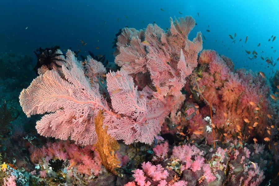 Explosion de couleurs sur les récifs de Puerto Galera.