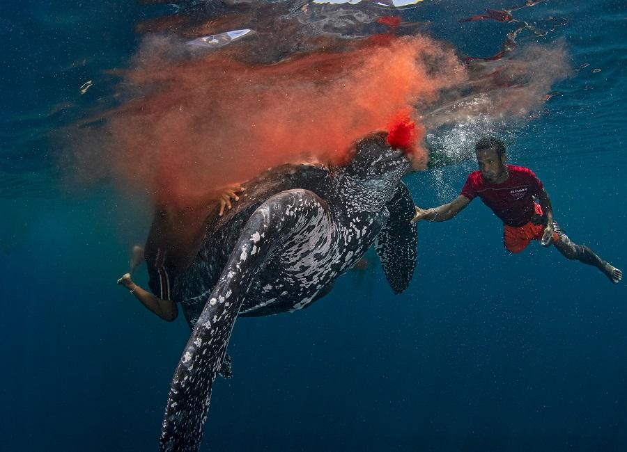 """Tradition kills"", îles Kei (Indonésie). © Scott Tuason / UPY2020"