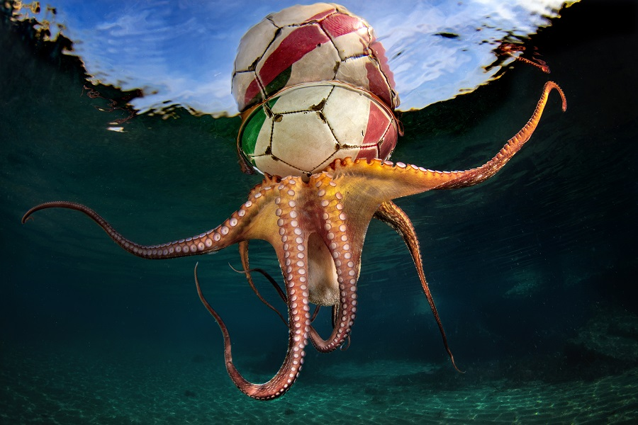 """Octopus training"", Italie © Pasquale Vassallo / UPY2020"