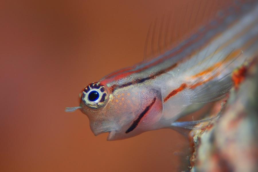 1er prix Portrait poisson © Luc Rooman