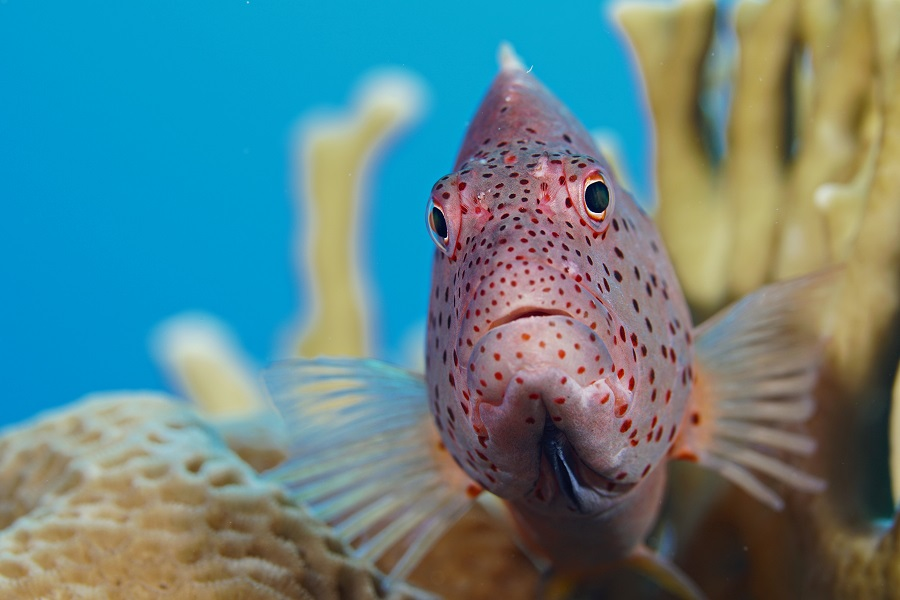 1er prix portrait de poisson - appareil compact © Luc De Laet