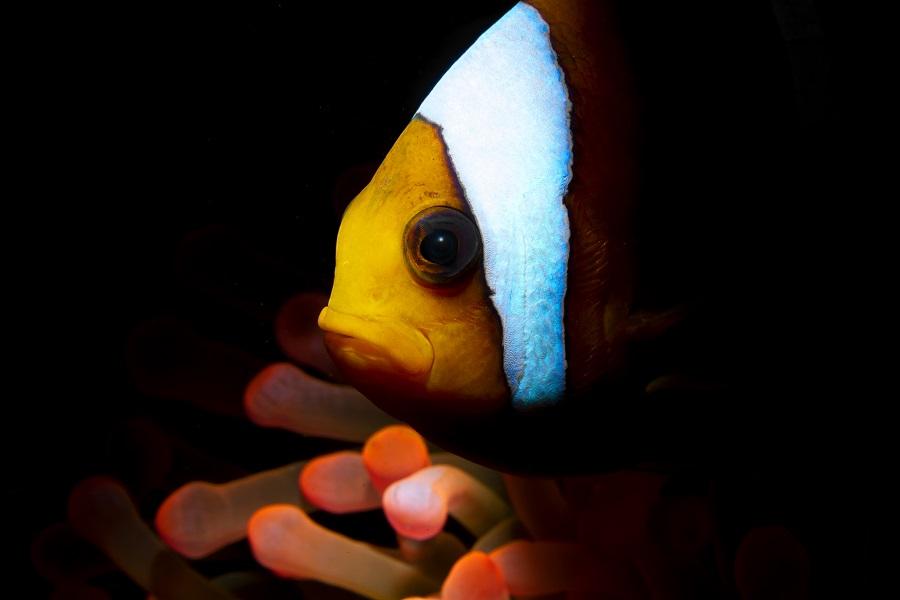 2ème prix Portrait de poissons © Gino Symus