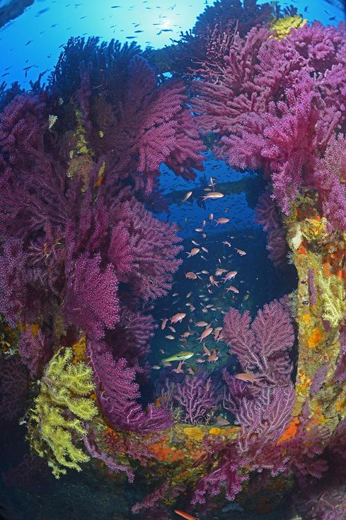 L'une des coursives du Grec, sublimée par d'exubérantes gorgones.