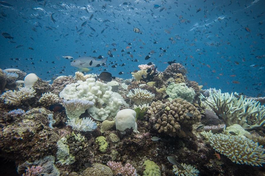 Les effets du blanchissement du corail étudiés par le CSM. © Pete West