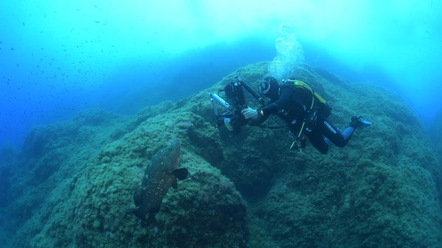 Mérou et plongeur sur le site de la Gabinière, dans le Parc national de Port-Cros.