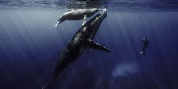 Baleine et son baleineau, tournage à La Réunion