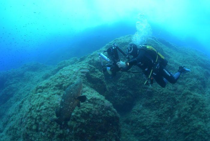 Plongeur et mérou sur le site de la Gabinière. © Nicolas Barraqué