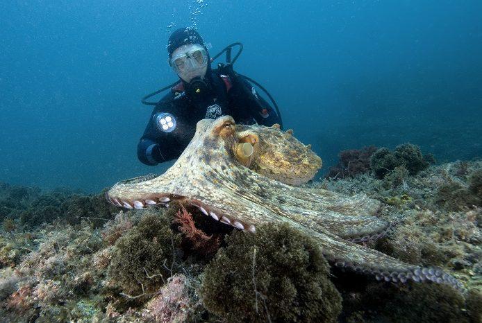 Corail rouge, poulpes, murènes; chapons et autres mérous sont les stars des plongées espagnoles. © Dominique Barray