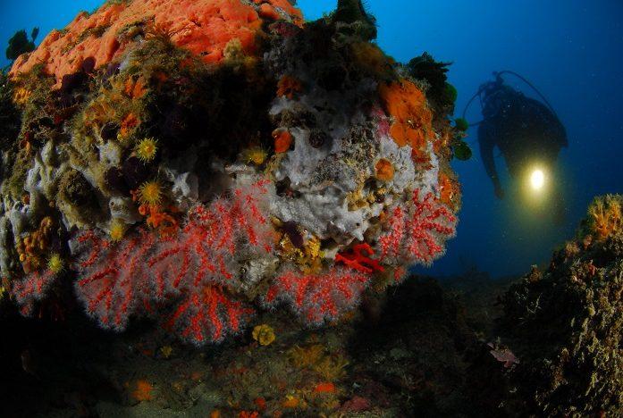 Corail rouge, poulpes, murènes; chapons et autres mérous sont les stars des plongées espagnoles. © Nicolas Barraqué