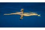 Résultats du concours photo spécial de Ocean Art :