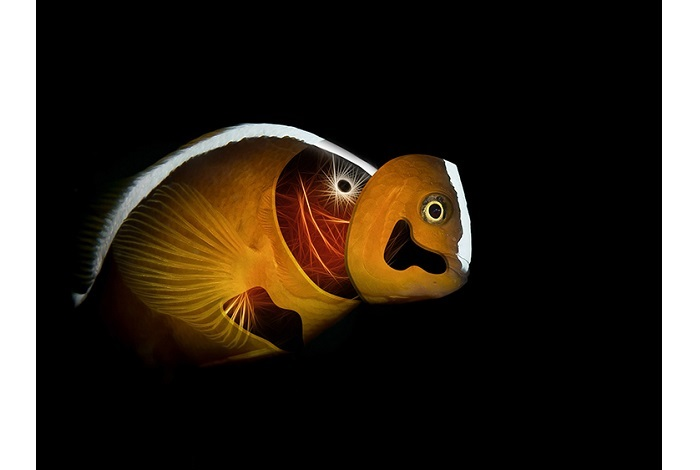 Troisième prix art sous-marin © Francisco Sedano Vera