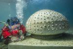 Le musée subaquatique de Marseille en cours d'installation
