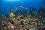 Planète Méditerranée : le nouveau documentaire de Laurent Ballesta diffusé sur Arte