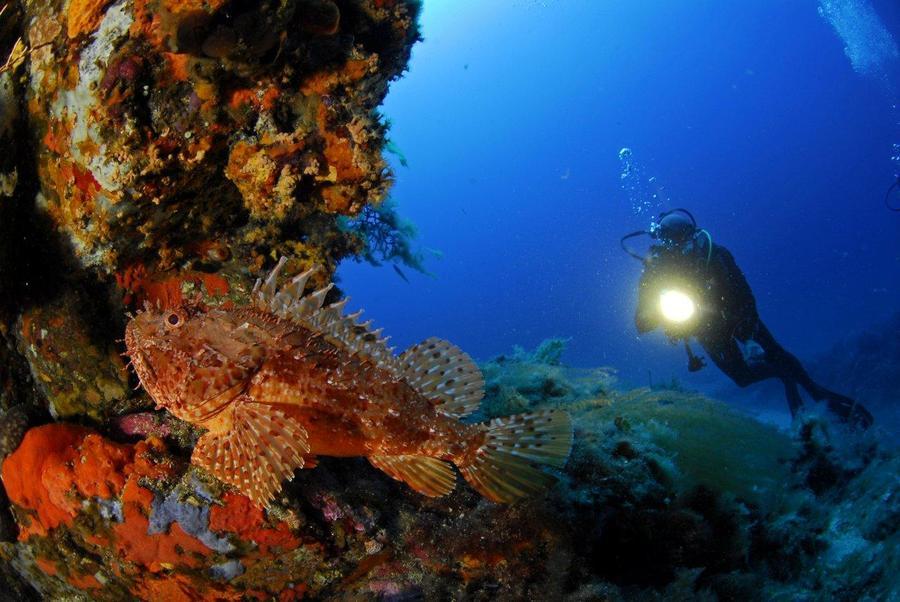 Plongeur et chapon