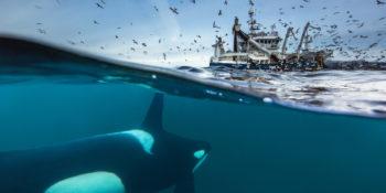 Le festin des orques
