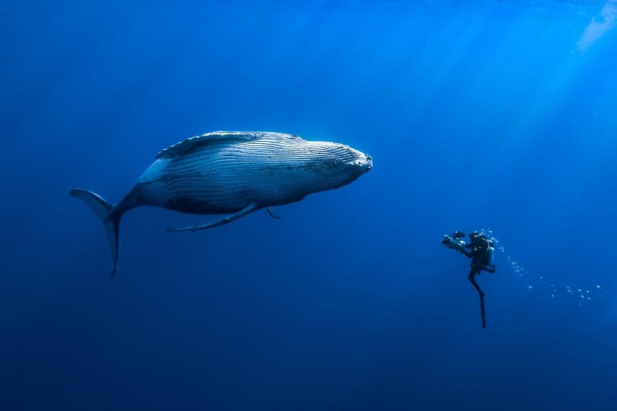 Quand baleines et tortues nous montrent le chemin. ©DR