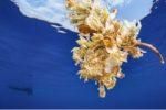 Galathea 2020 : le palmarès photo et vidéo