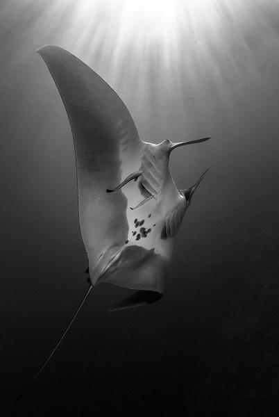 1er prix Noir et blanc © Claude Lespagne