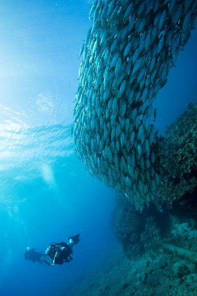 Les grands bancs de poissons compacts ne sont pas rares autour de l'île. © Yann Valton