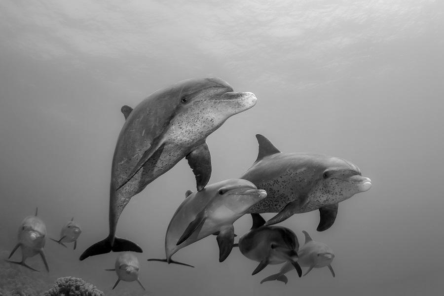 2ème prix Noir et blanc © Claude Lespagne