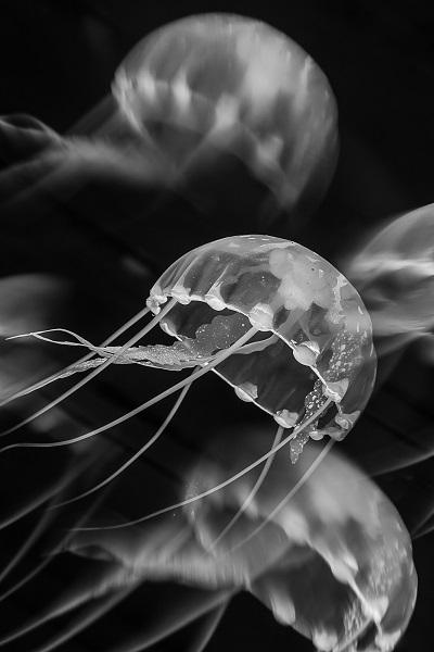 3ème prix Noir et blanc © Florence Roux