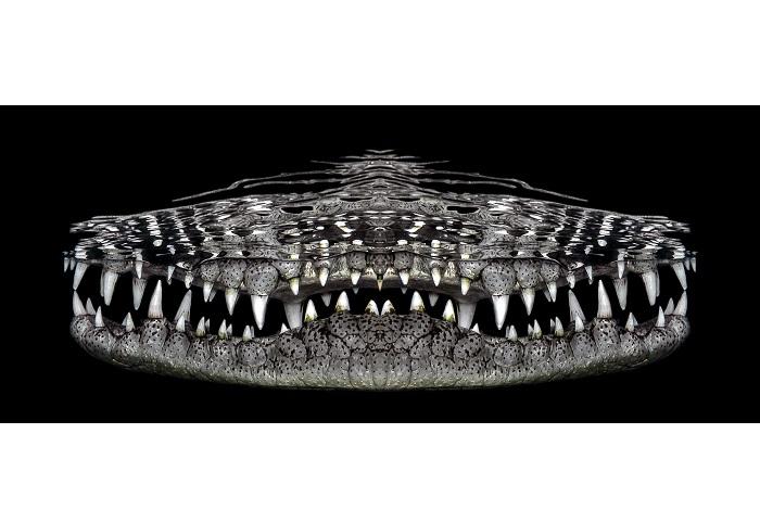 1er prix - art sous-marin © Jenny Stock