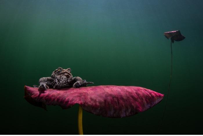 2ème prix - eaux froides© Johan Sundelin