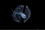 Palmarès du Ocean Art 2020