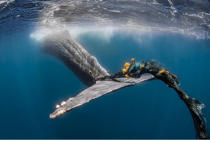 Mention honorable - préservation des océans © Rafael Fernandez