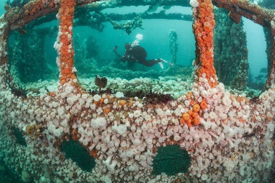 1er prix vivre ensemble - eaux britanniques. © Kirsty Andrews / UPY2021
