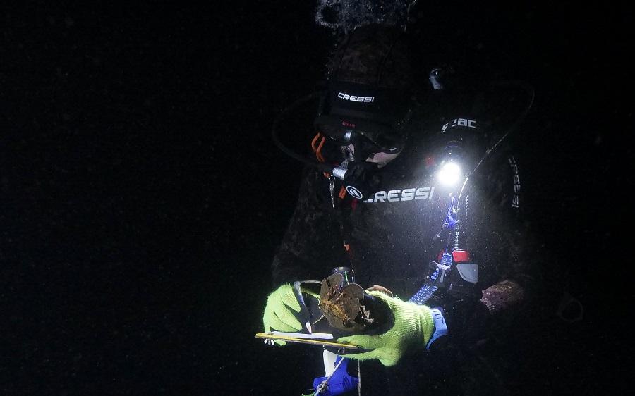 Tagging et monitoring des cigales de mer endémiques de Sainte-Hélène. © Alexandra Childs et Rémi Demarthon / Fathom Pictures
