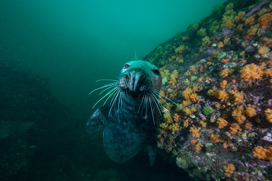 Les plongées en Gaspésie vous réservent plein de surprises... © Steven Melanson - Club nautique de Percé