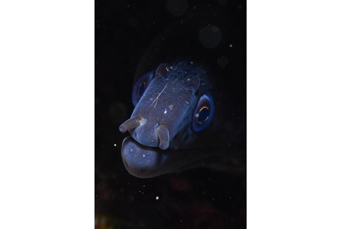 Macro poisson. © équipe n° 1 - Florence Roux et Béatrice Landreau