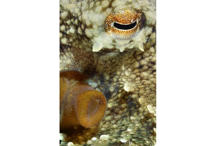 Macro non poisson. © Véronique Wurmli-Baudot et Vincent Maran