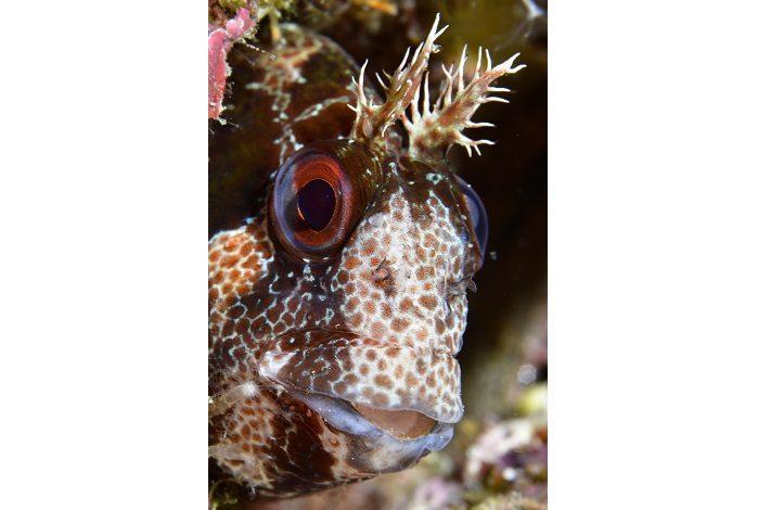 Macro poisson. © Véronique Wurmli-Baudot et Vincent Maran