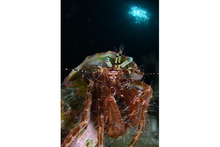 Macro non poisson. © équipe n° 4 - Julien Carpels et Martine Ruoppolo